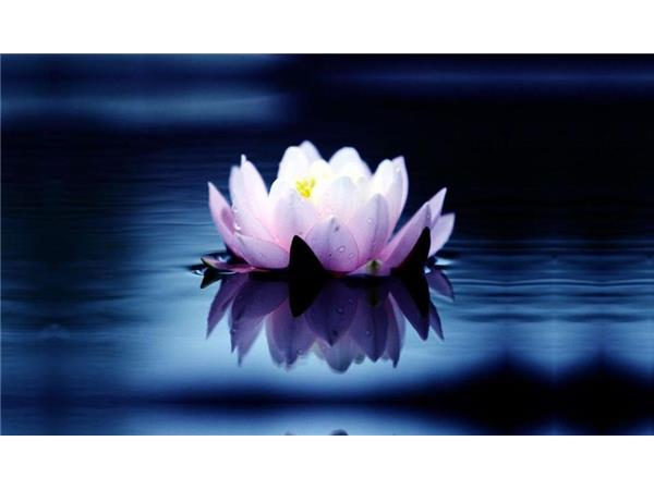 Guided meditation for the new year lotus flower present moment guided meditation for the new year lotus flower present moment peace mightylinksfo Choice Image